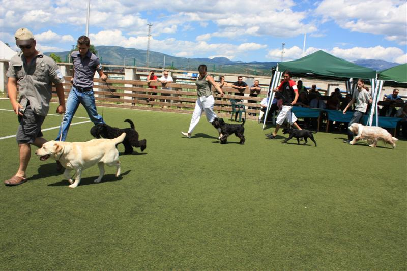 U Kninu 8. kolovoza VII. Nacionalna izložba pasa svih pasmina CAC Knin 2015