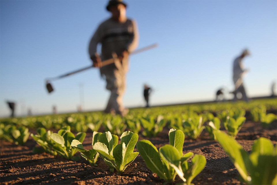Pregled dodijeljenih potpora poljoprivredi u 2020. godini