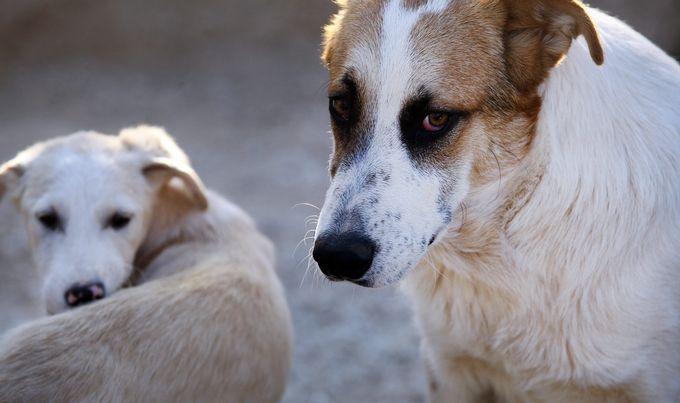 psi-kućni-ljubimci