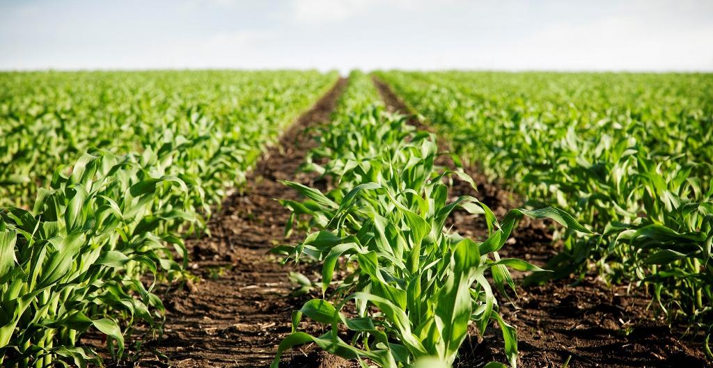 poljoprivreda-radionica