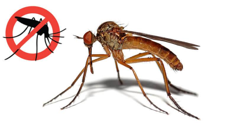 Obavijest građanima o izvođenju radova druge adulticidne dezinsekcije komaraca na području grada Knina